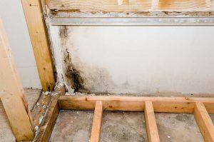 mold removal broward