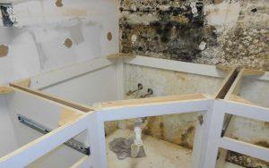 mold remediation miami dade