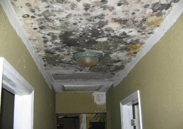 mold damage removal broward